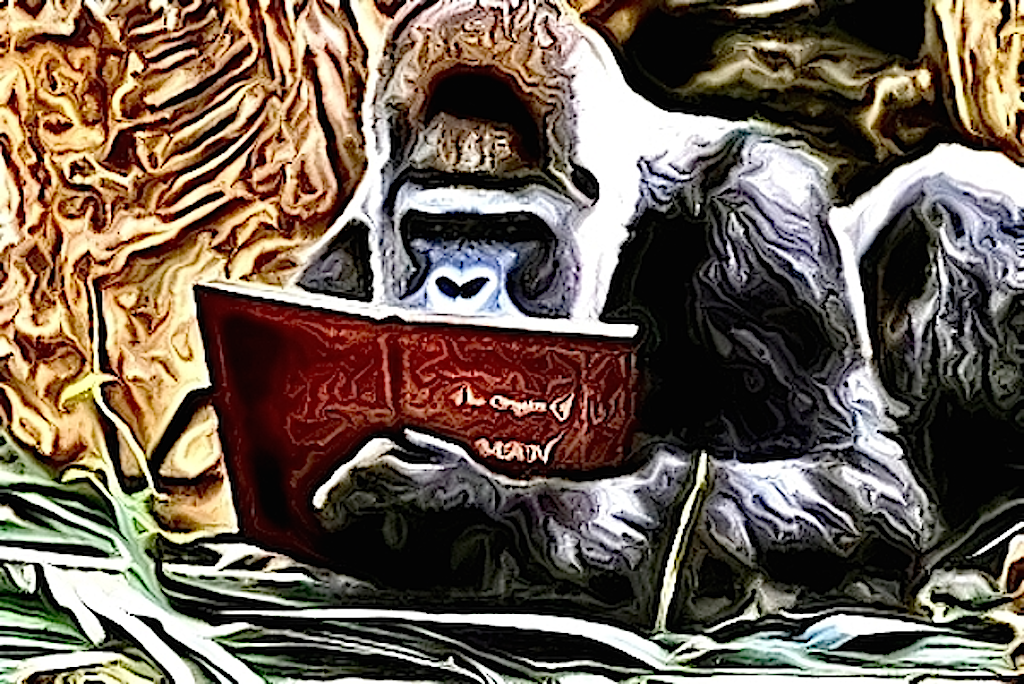 Chris, the story reading ape